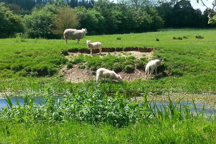 Rural Tranquiity