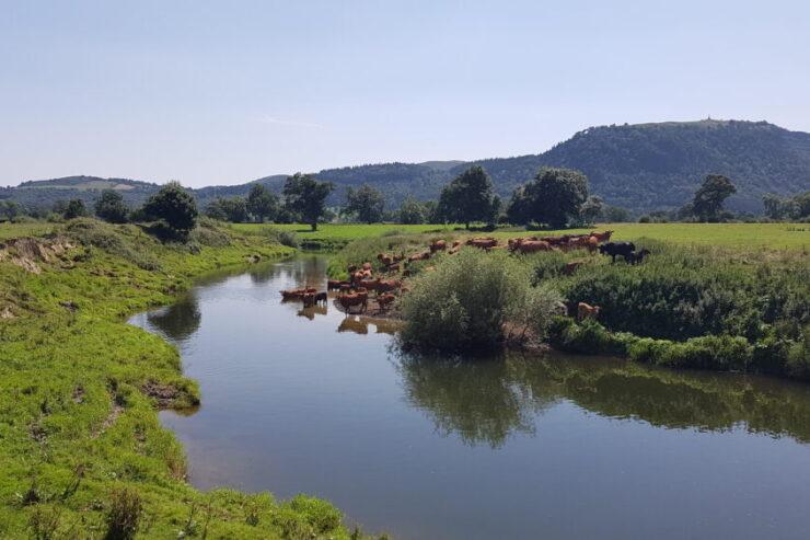 River Severn at Llandrinio